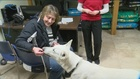 Dog rescued from Racine Marina gets forever home