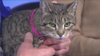 Kenosha Forgotten Friends helps animals
