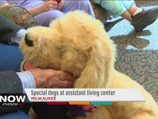 robotic dogs help those with dementia 1 35081823 ver1 0 640 480