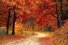 How to find Wisconsin's best fall foliage