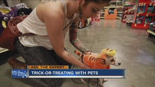 Ask the Expert: Can pets come trick-or-treating?