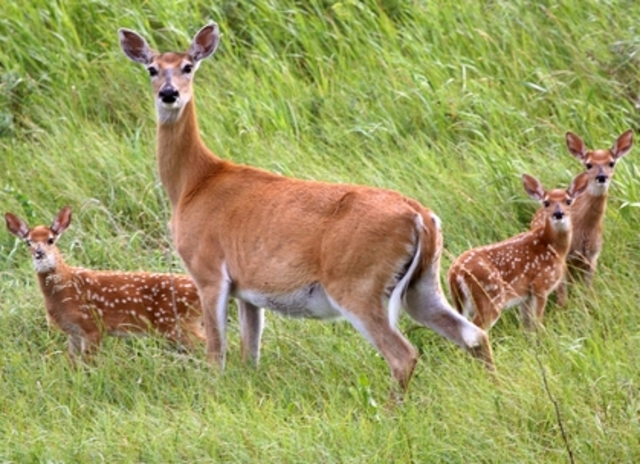 possible deer poaching investigated in wauwatosa tmj4 milwaukee wi