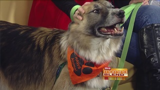 Helping Pets Navigate the Stress of the Holidays