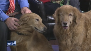 13th Annual Goldens' Holiday House