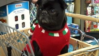 Holiday gifts for furry friends