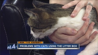Ask the Expert: Giving pets as gifts