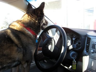 Charlie at the wheel during one of their many road trips.