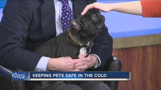 Keep an eye out for furry friends in the cold