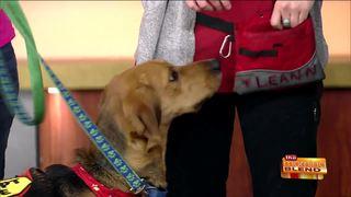 Tips for Proper Dog Meetings & Greetings