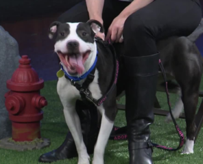 Ask the Expert: Keeping your pets safe