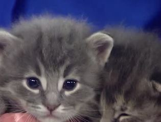 Ask the Expert: Caring for neonatal kittens