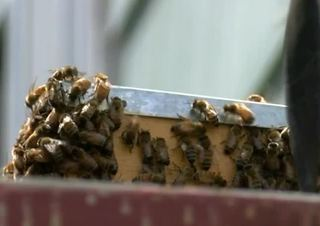 Thousands of bees cause a buzz in Riverwest