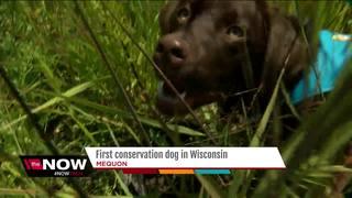 Mequon Nature Preserve gets invasive species dog