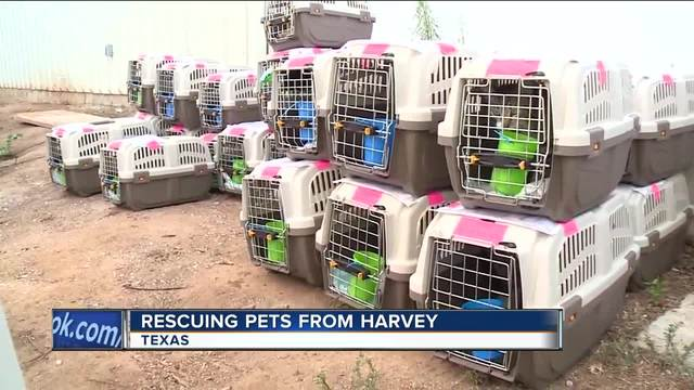 Pet shelters, welfare groups step up to meet Harvey's threat