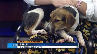 Ask the Expert: Canine testing