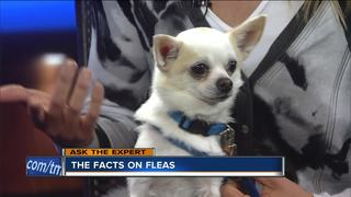 Ask the Expert: The facts about fleas
