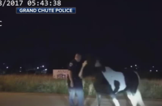 VIDEO: WI police chase down loose horses