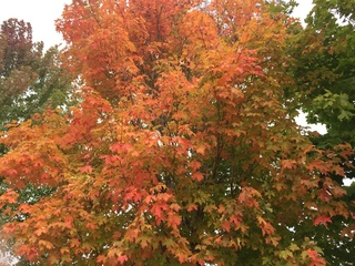 PHOTOS: Fall colors across Wisconsin