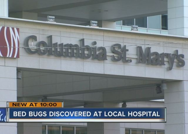 Patient: Bed bug found at Columbia St. Mary\'s Emergency Room - TMJ4 ...
