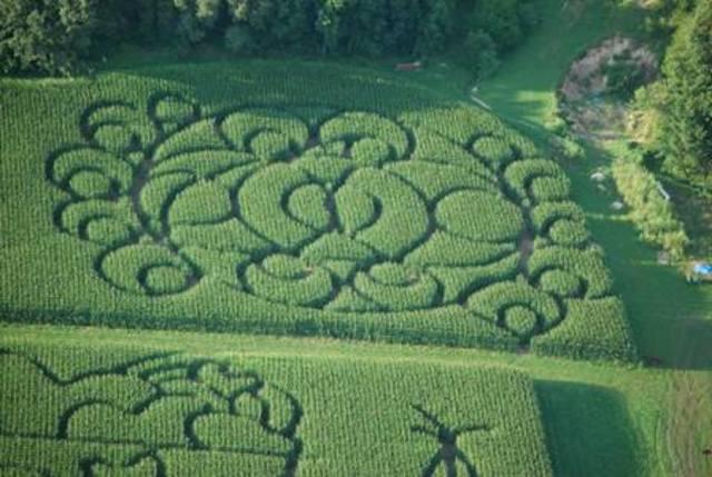 lodi farmer boosts income through corn maze for tourists tmj4