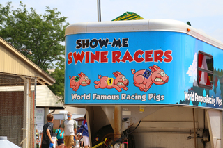 GALLERY: WIsconsin State Fair pig race