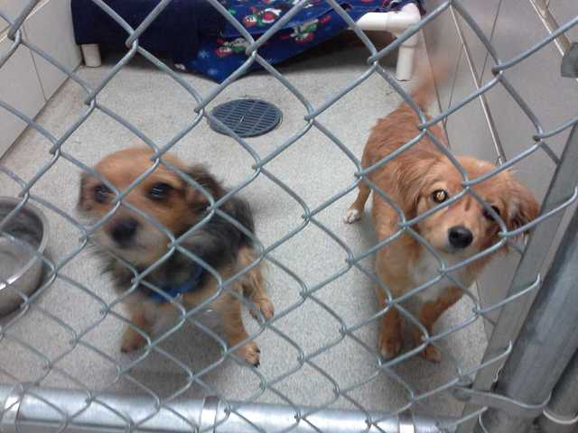 Rescue Dogs For Adoption In Milwaukee
