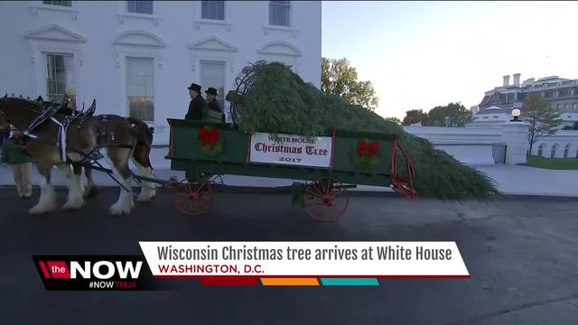 Melania Trump to accept White House Christmas tree on Monday ...