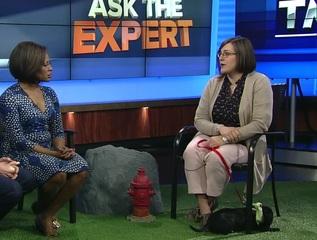 Ask the Expert: Adopting barn cats