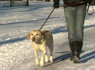 Vet offers tips to protect pets in cold weather