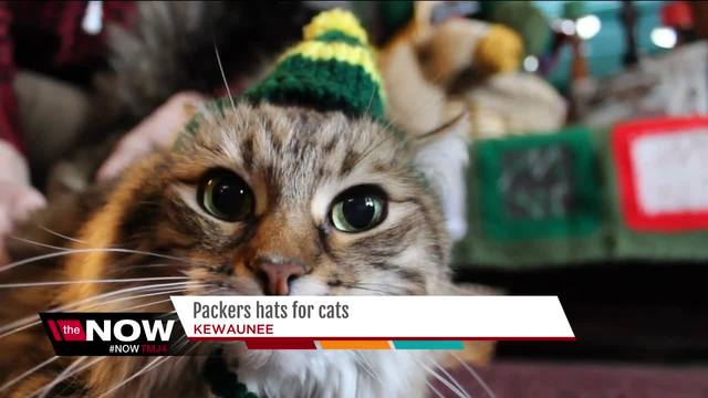 Turn your feline into the purr-fect Packers fan