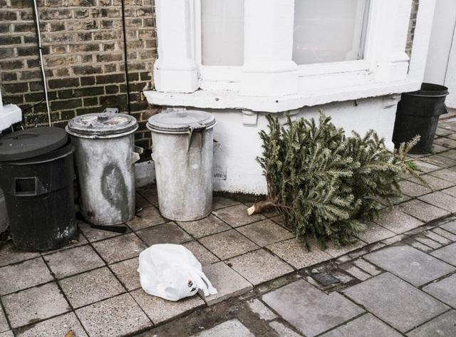 Woman returns dead Christmas tree to Costco - TMJ4 ...