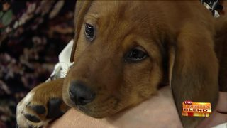Help for Pet Owners with Financial Struggles