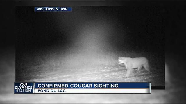 brookfield cougar