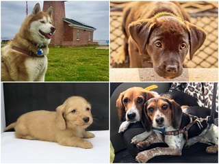 40 of our favorite viewer dog photos