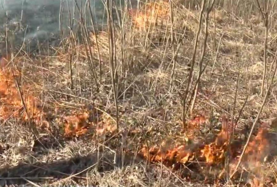 Hartland students burn prairie to help renew ecosystem - TMJ4 Milwaukee, WI