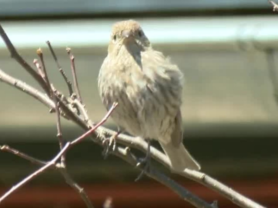 Southerly Winds Bring A Huge Migration Of Birds Into Wisconsin Tmj4 Milwaukee Wi
