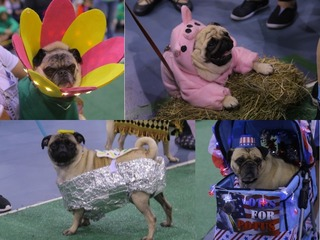 PHOTOS: Cutest costumes from MKE Pug Fest 2018