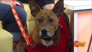 Safety Tips for Traveling with Your Pets