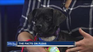Ask the Expert: The facts on fleas