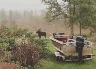 Moose spotted in Wisconsin woman's backyard