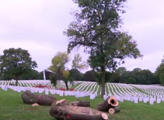 Volunteers clear branches to honor veterans