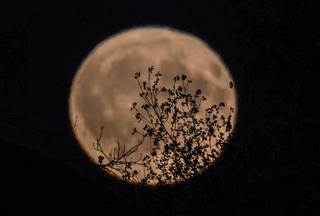 LOOK UP: It's a full harvest moon tonight