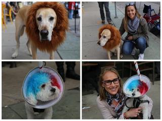 Brady Street Pet Parade returns to MKE [PHOTOS]