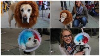 Brady Street Pet Parade 2018 [PHOTOS]