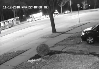 4-year-old left in tow lot caught on camera